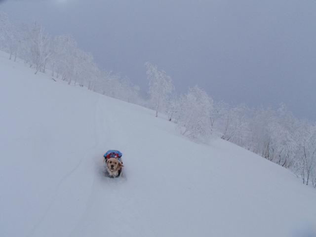 小雪ちゃん in 北海道