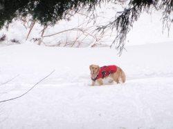 小雪ちゃん in snow