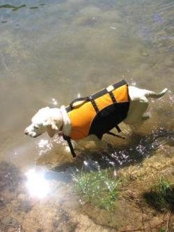 泳ぐの大好き