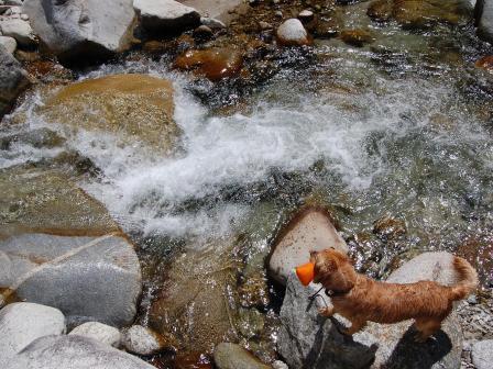長野の川にて