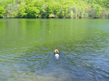 モモちゃんひたすら泳ぐ